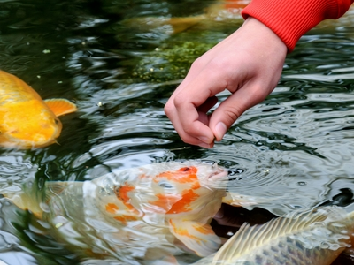 fish feeding behavior
